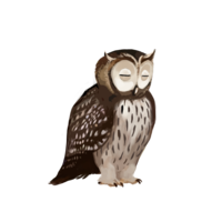 compagnon-hibou-off.png