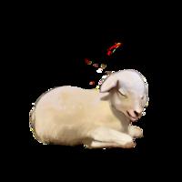 compagnon-mouton-off.png