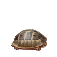compagnon-tortue-off.png